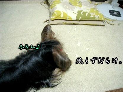 5_20090803151825.jpg