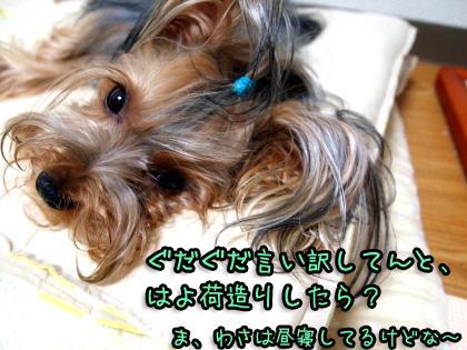 5_20090811160808.jpg