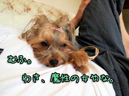 5_20090812204449.jpg