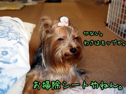 5_20090824201259.jpg