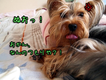 5_20090825192540.jpg