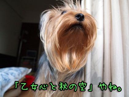 5_20090911194701.jpg