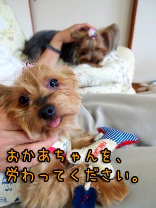 5_20090920201137.jpg