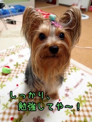 5_20091005175930.jpg