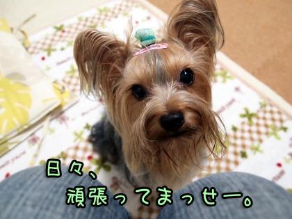 5_20091008192604.jpg