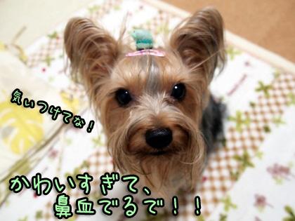 5_20091012191038.jpg
