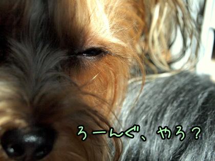 5_20091104125651.jpg