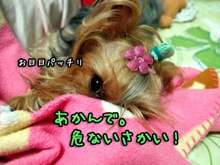 5_20091109191638.jpg