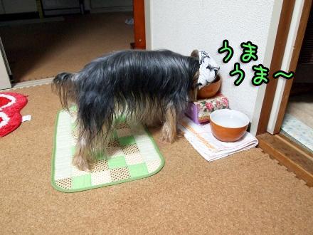 5_20091112190442.jpg