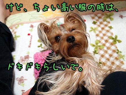 5_20091116191612.jpg
