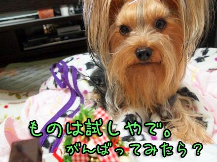 5_20091122163757.jpg