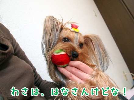 5_20091129184605.jpg