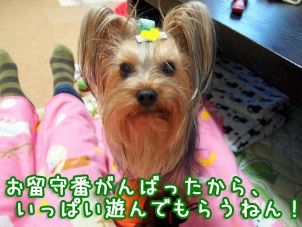 5_20091204185700.jpg