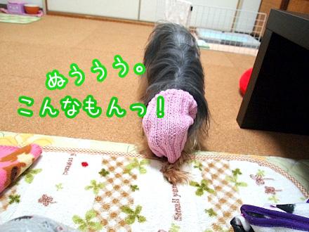 5_20091214174319.jpg