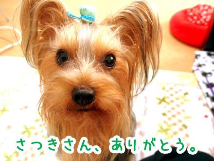 5_20091216194844.jpg