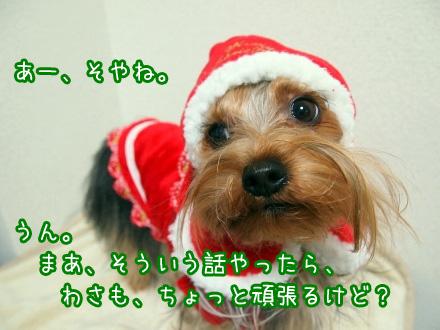 5_20091218193205.jpg