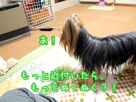 5_20091219192314.jpg
