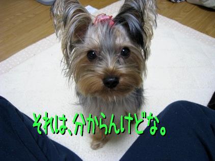 6_20090113195217.jpg