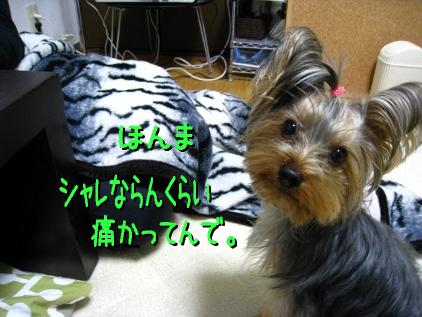 6_20090116214031.jpg