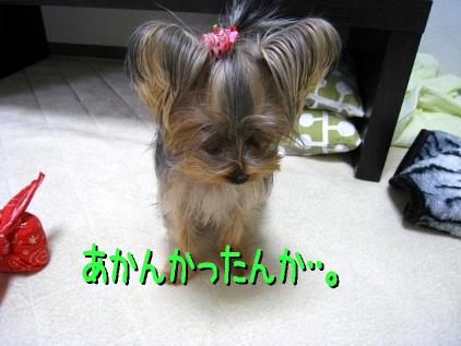 6_20090118160902.jpg