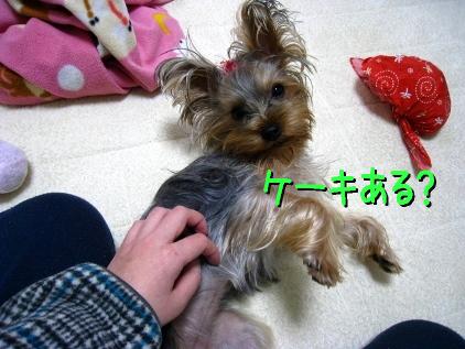 6_20090121124918.jpg