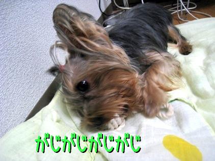 6_20090122201138.jpg