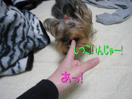 6_20090131194834.jpg