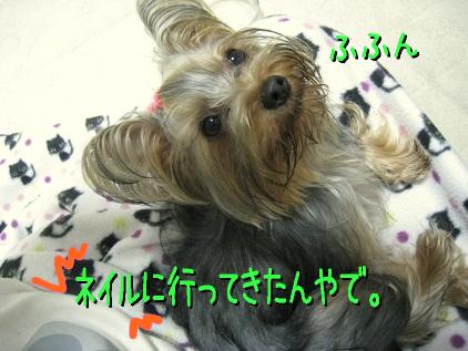 6_20090309183420.jpg