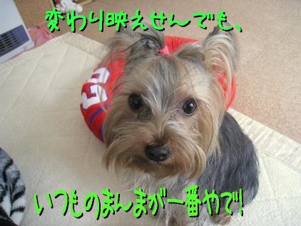 6_20090330185341.jpg