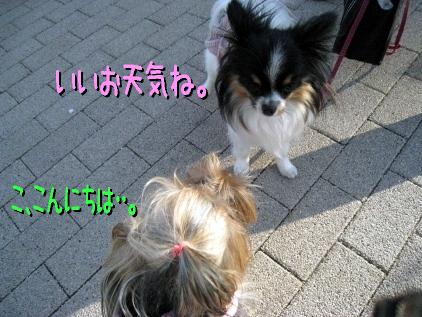 6_20090410213121.jpg