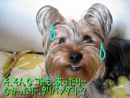 6_20090415142646.jpg