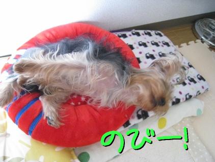 6_20090425195310.jpg