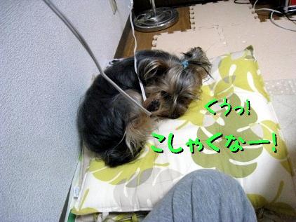 6_20090426143048.jpg