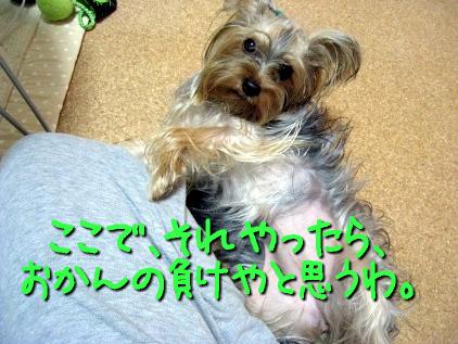 6_20090504215638.jpg