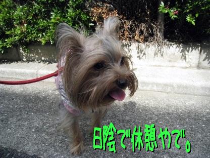 6_20090515185823.jpg