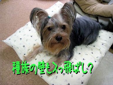 6_20090521192541.jpg