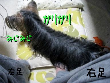 6_20090525185940.jpg