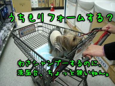6_20090528162915.jpg