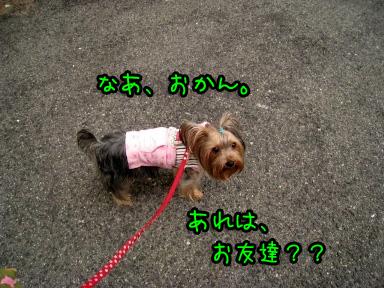6_20090529183016.jpg