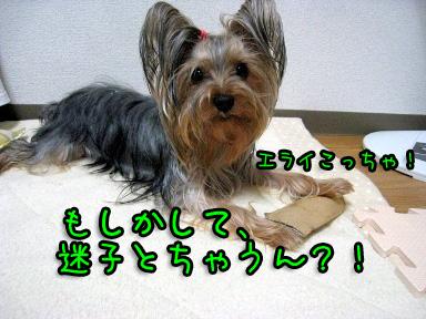 6_20090605202230.jpg