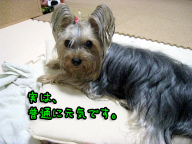 6_20090609194426.jpg
