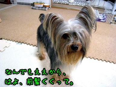 6_20090612172207.jpg