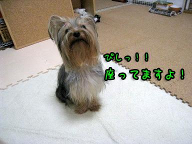 6_20090613183541.jpg