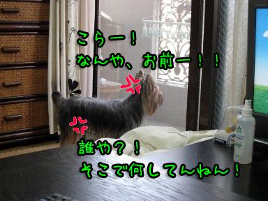 6_20090615184941.jpg