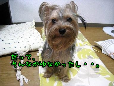 6_20090618175326.jpg