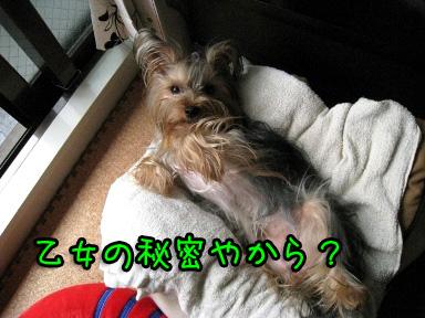 6_20090619192517.jpg