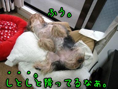 6_20090621150322.jpg