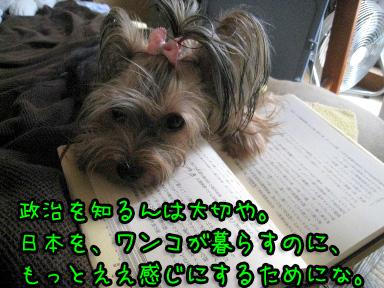6_20090625202548.jpg