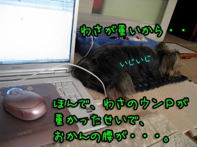 6_20090630144108.jpg