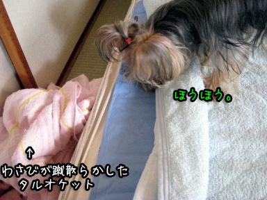 6_20090702194705.jpg
